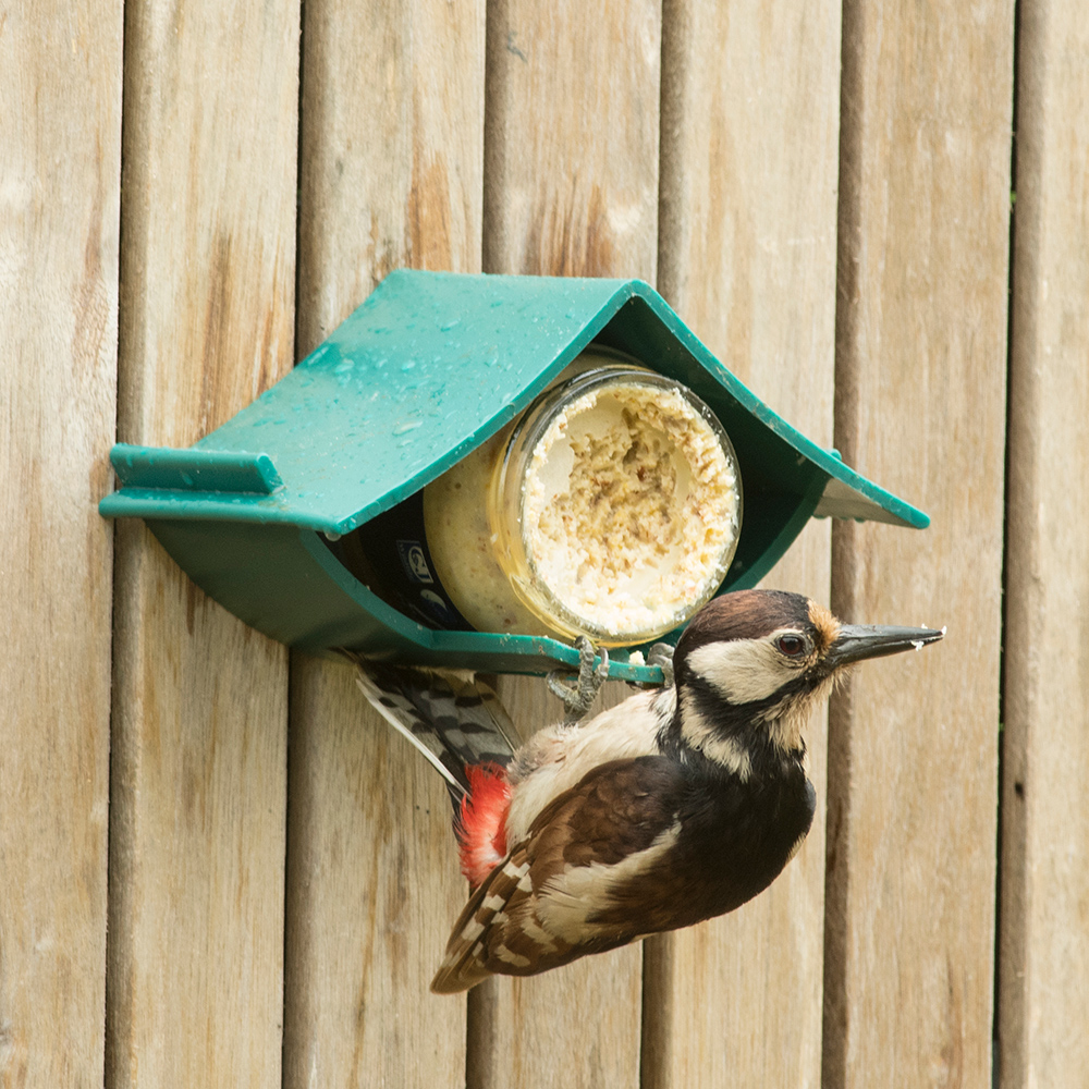 Wildbird Pindakaaspothouder Plastic - Voersilo - Groen per stuk