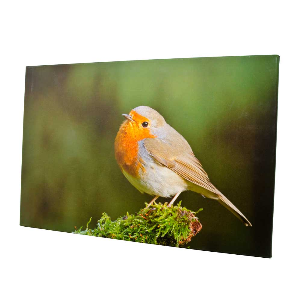 Foto op canvas 40x60 cm Roodborst