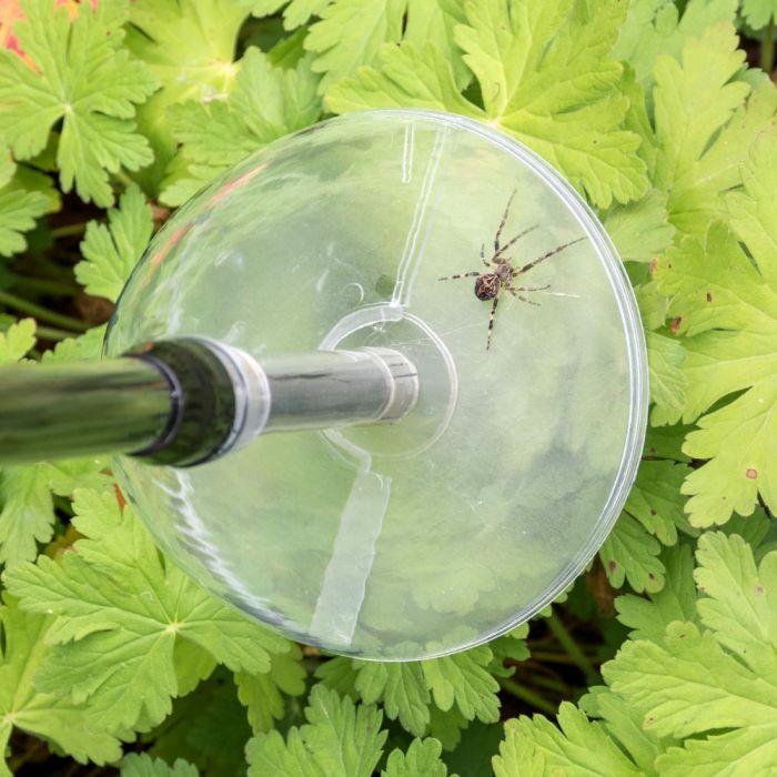 BugAway spinnenvanger lang