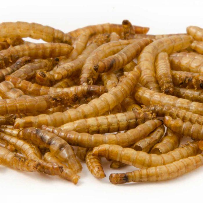 Gedroogde meelwormen