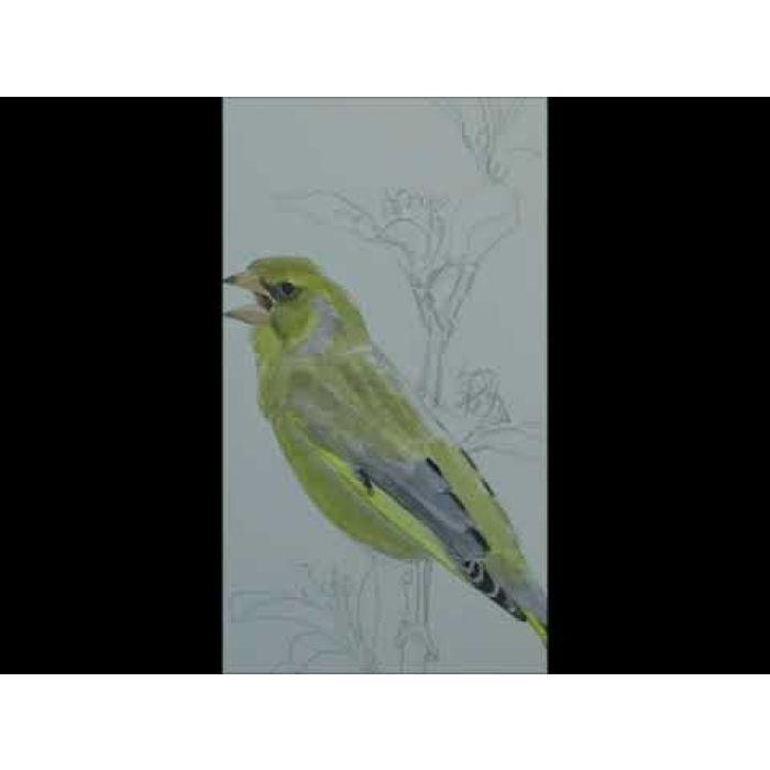 Mokkenpakket waddenvogels - Elwin van der Kolk