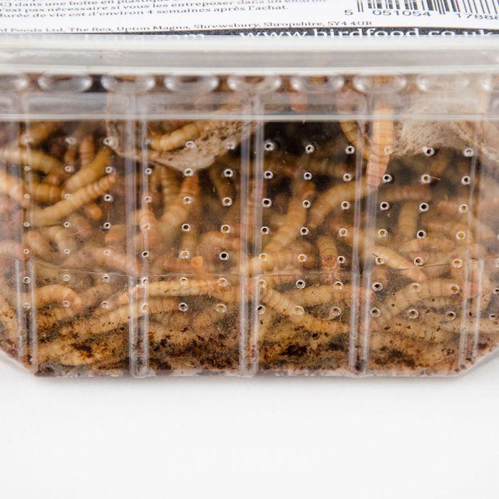 Levende meelwormen