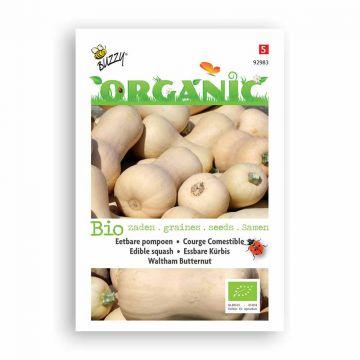 Buzzy® Organic Wintersquash Waltham Butternut (BIO)
