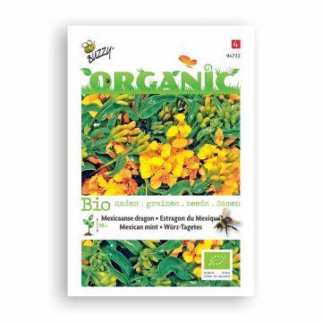 Buzzy® Organic Tagetes Lucida (BIO)