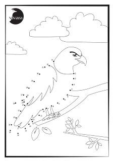 Cijfertekening Roofvogel