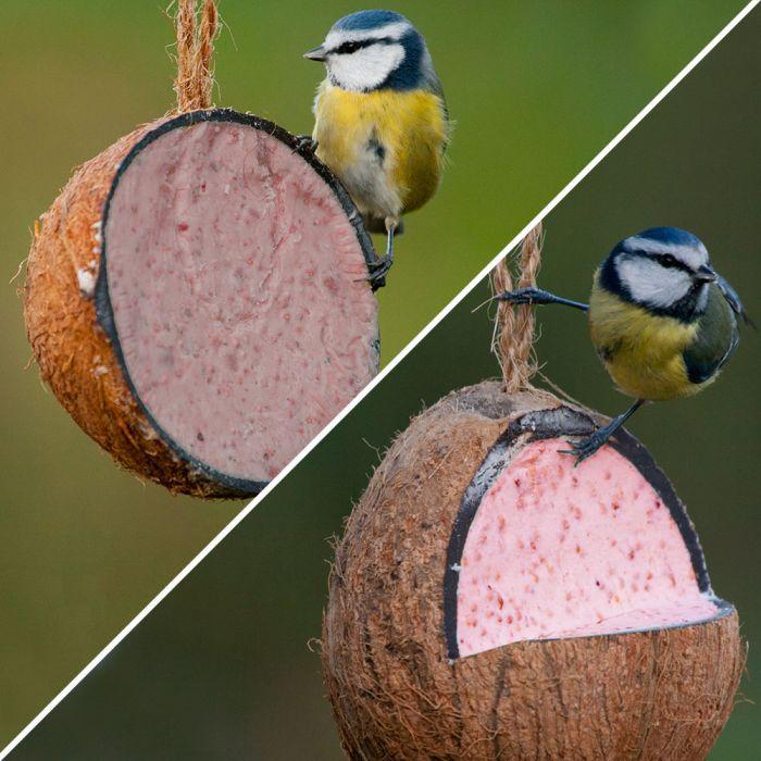 Gevulde kokosnoot met bessen