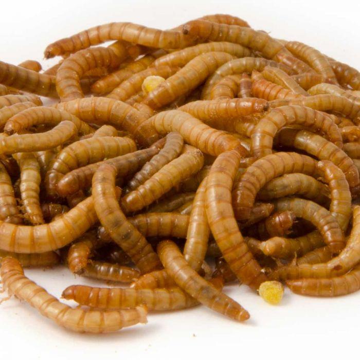 Levende mini-meelwormen