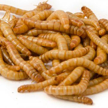 Levende meelwormen 100 g