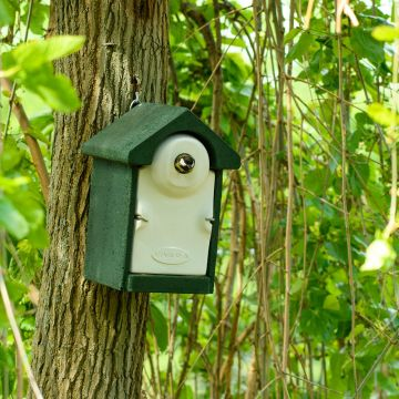 Nestkast Sevilla WoodStone 32 mm Groen
