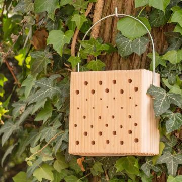 Insectenblok Lanzarote