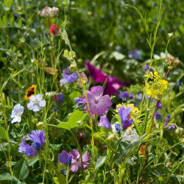 Vlinderbloemenmengsel (voor 12 m2 tuin)