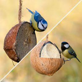 Gevulde kokosnoot met insecten