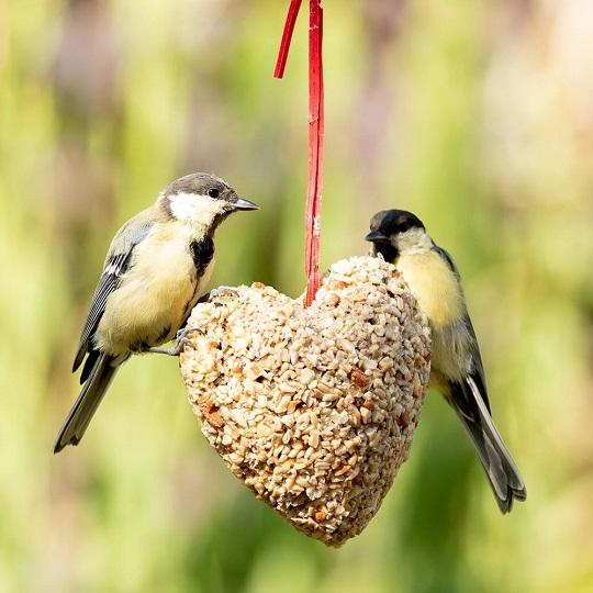 Houd vogels fit met vet!