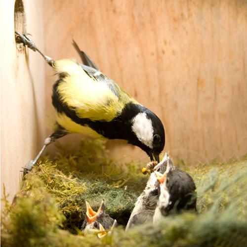 Sfeer nest